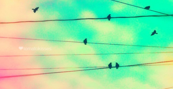 a picture of birds on powerlines with a blue sky and pink tinged clouds